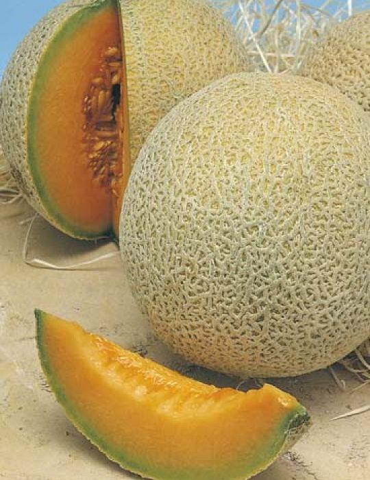Rock Melon Hales Best