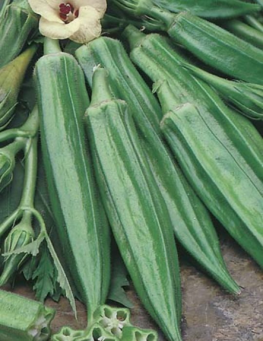 Okra Clemson's Spineless (Lady's Fingers)