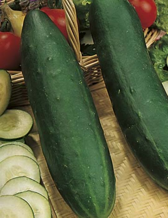 Cucumber Long Green Supermarket