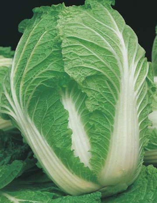Cabbage Chinese Nagaoka F1