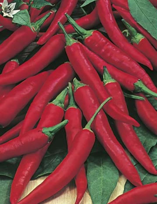 Chilli Pepper Cayenne Hot