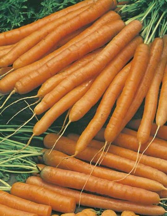 Carrot Baby Pak