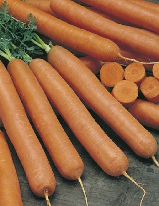 Carrot Early Nantes ORGANIC