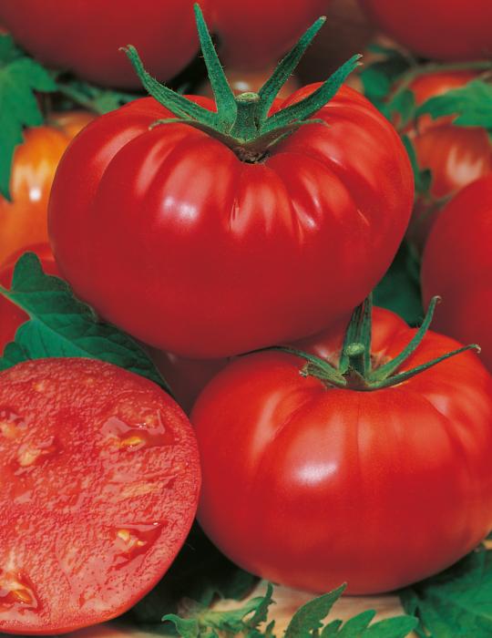 Tomato Mortgage Lifter HEIRLOOM