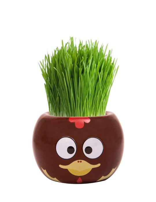Grass Hair Kit - Farm Animals (Chicken)