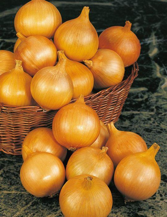 Onion Pukekohe Long Keeper