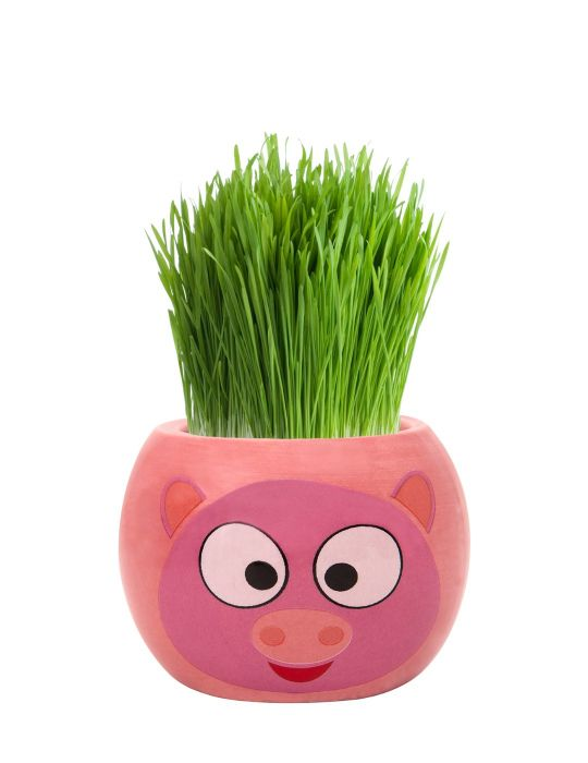 Grass Hair Kit - Farm Animals (Pig)