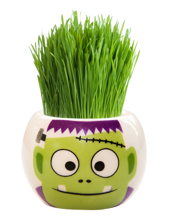Grass Hair Kit -  Halloween Party (Frankenstein)