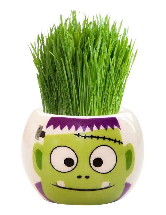 Grass Hair Kit -  Halloween Party (Frankenstein)