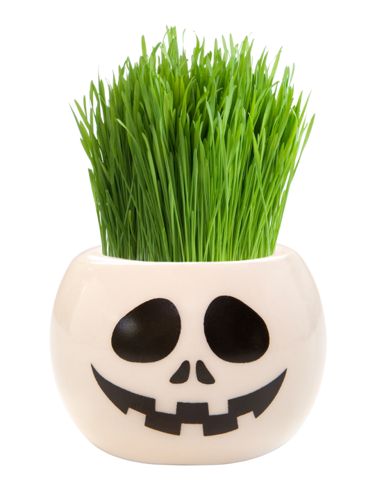 Grass Hair Kit -  Halloween Party (Skull)
