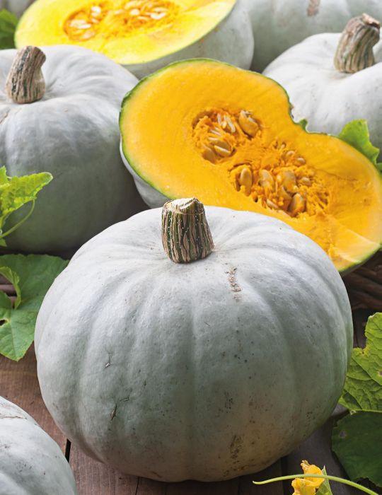 Pumpkin Whangaparoa Crown