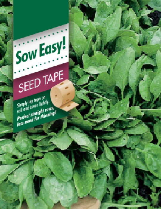 Spinach Viking Seed Tape
