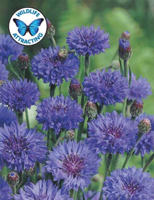 Cornflower Blue Ball