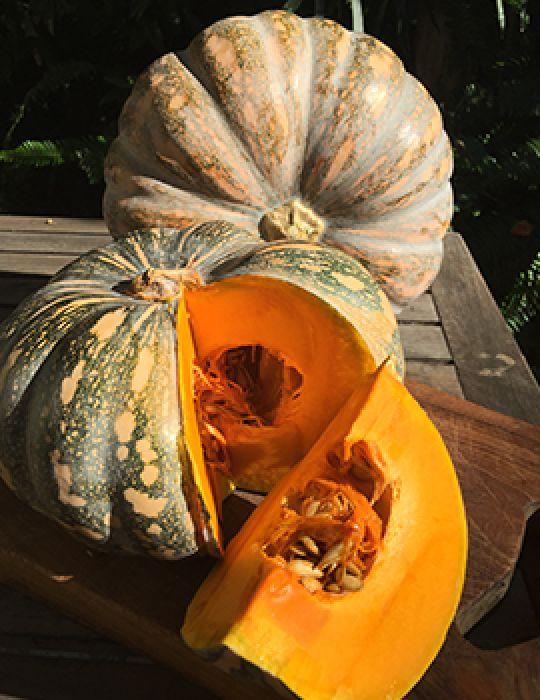 Pumpkin J.A.P (or Kent)
