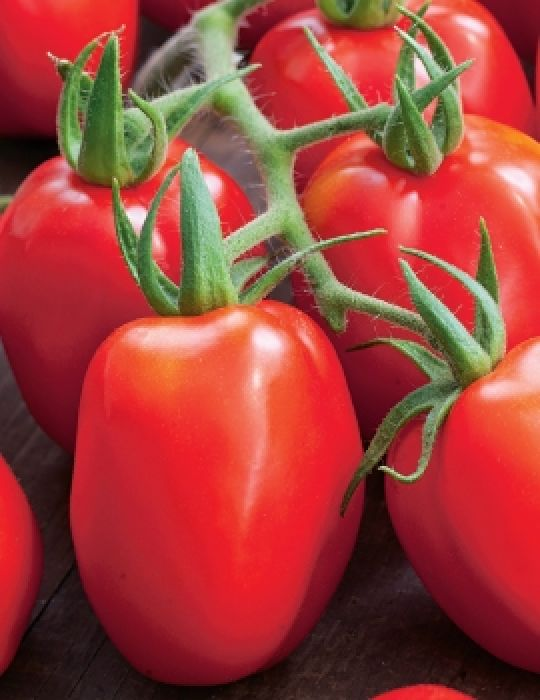 Tomato (Plum) Roma VF