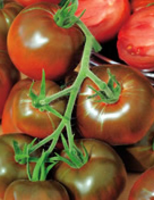 Tomato Black Russian HEIRLOOM Seeds
