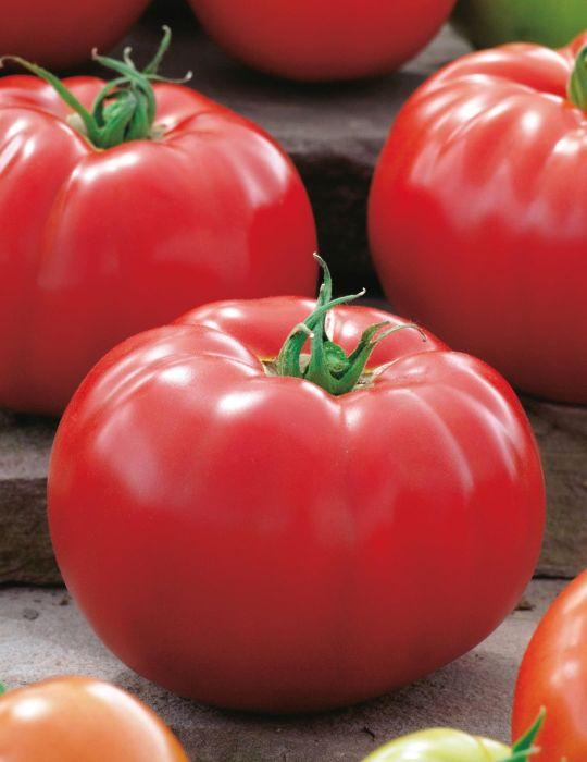 Tomato Big Beef F1