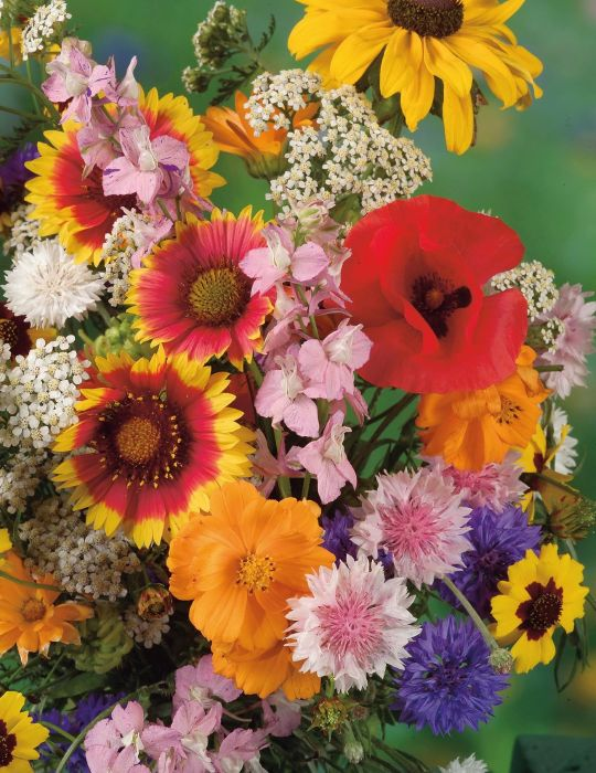 Wildflower Mix for Bees and Butterflies