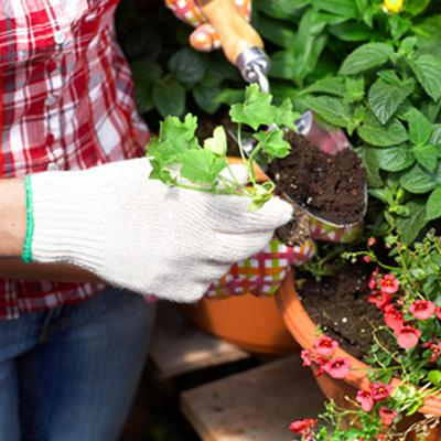 Gardening Tools Care And Maintenance