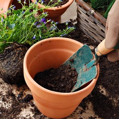 How to grow your own container garden!
