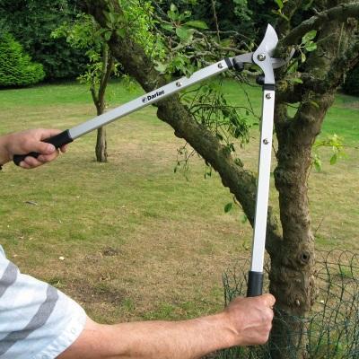 Ten Rules of Pruning