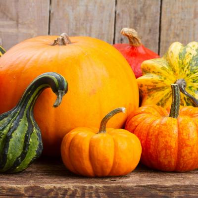 Growing Pumpkin, Squash & Zucchini