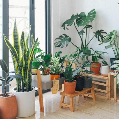 7 tips to growing healthy indoor plants!