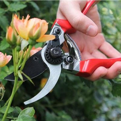 Essential Gardening Tools for the Garden