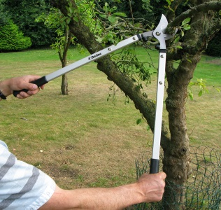 pruning with darlac